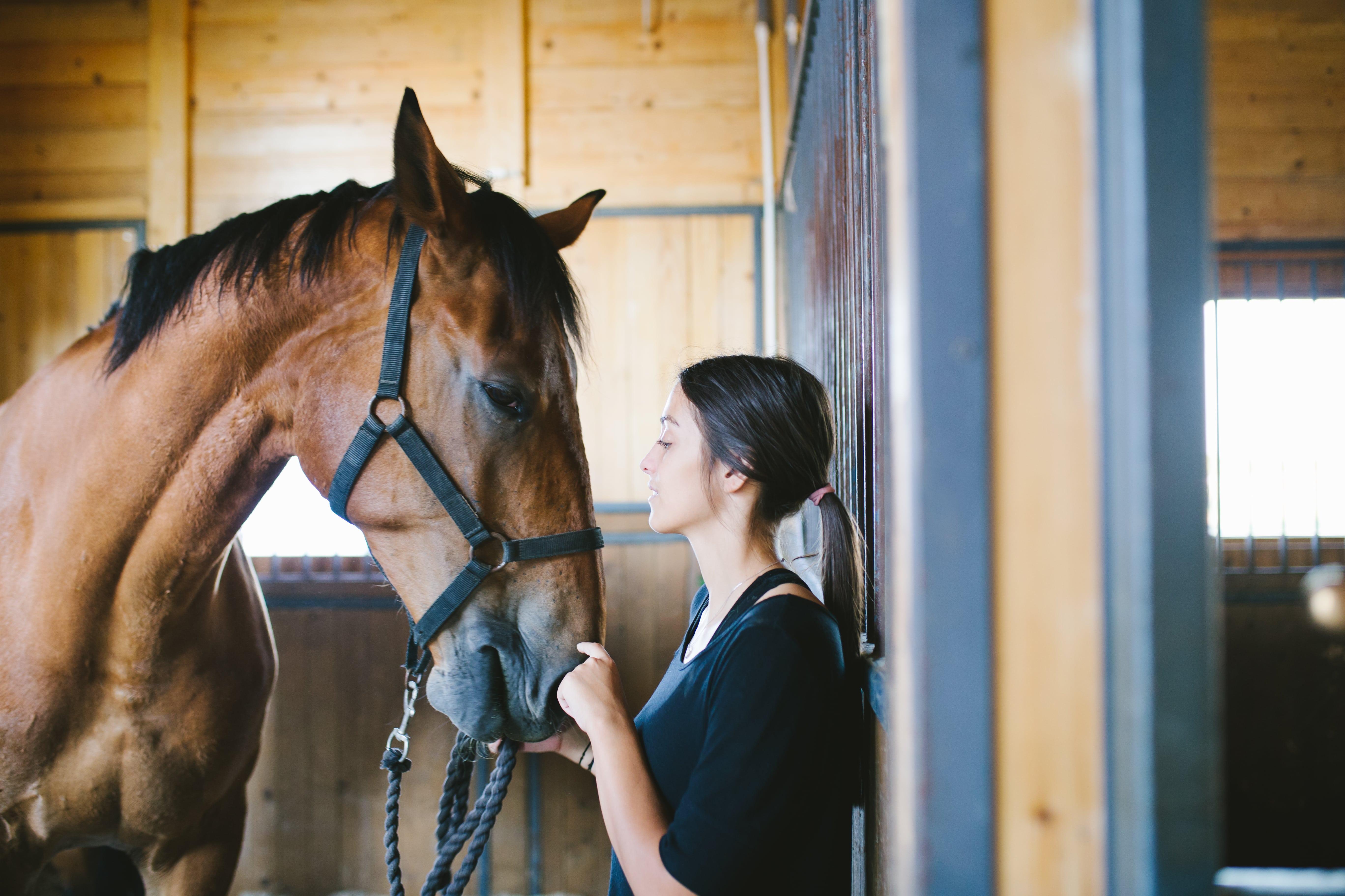 cuidados com um cavalo