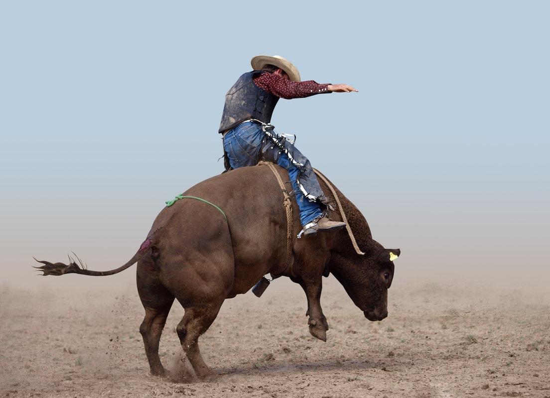 Destaque - Conheça as 4 raças de touro sucesso no rodeio